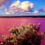 西オーストラリア州にあるピンク色の湖はどこ?場所やアクセス方法は?