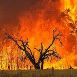 オーストラリアで山火事が起こる原因は?ユーカリの自然発火が理由?